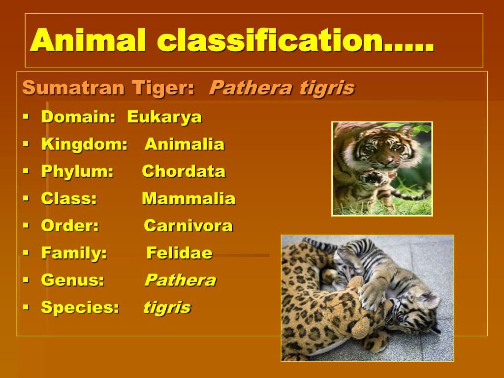 PPT - Carl Linnaeus 1707-1778 PowerPoint Presentation ...