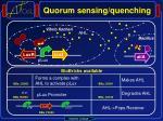 quorum sensing quenching