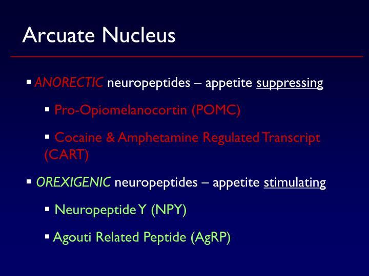 Arcuate Nucleus