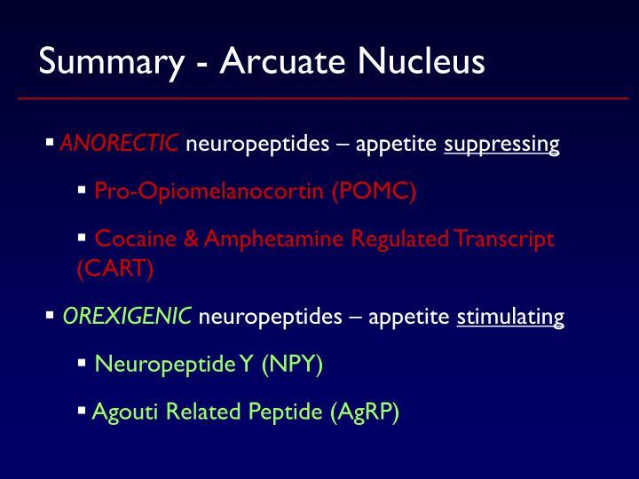 Summary - Arcuate Nucleus