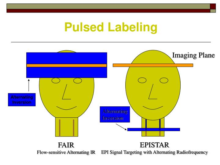 Pulsed Labeling
