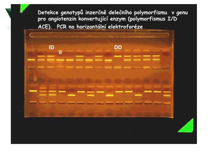Detekce genotypů inzerčně d
