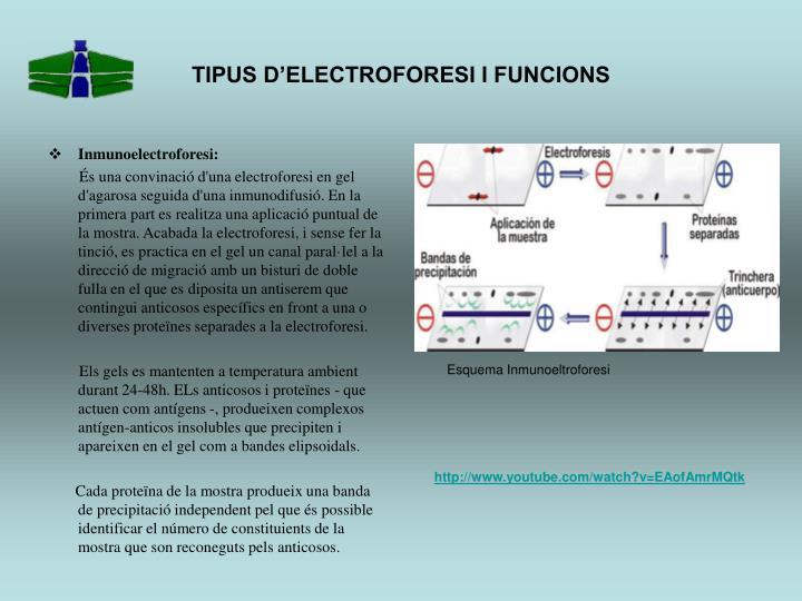 TIPUS D'ELECTROFORESI I FUNCIONS