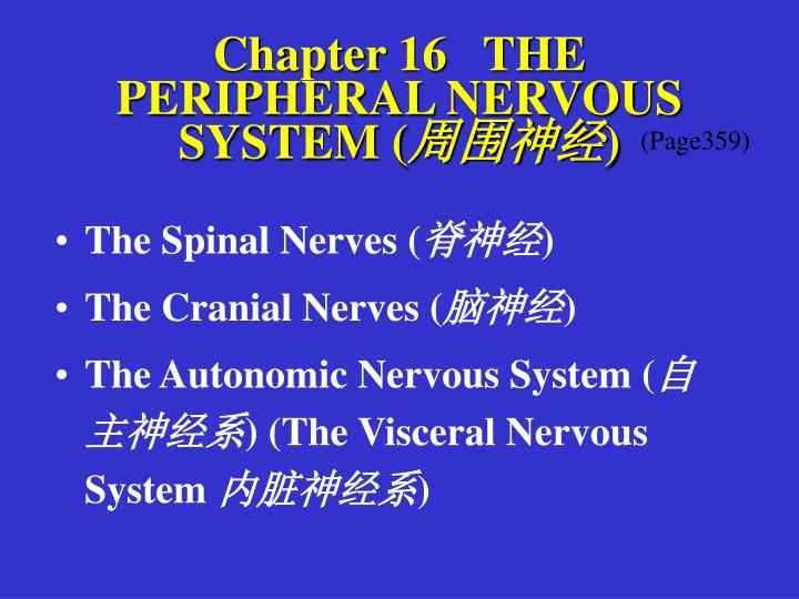 Chapter 16   THE PERIPHERAL NERVOUS SYSTEM (