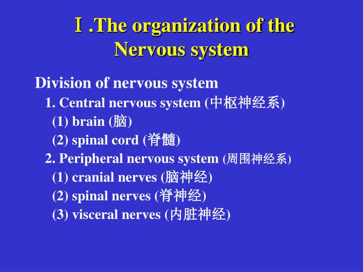 Ⅰ.The organization of the Nervous system