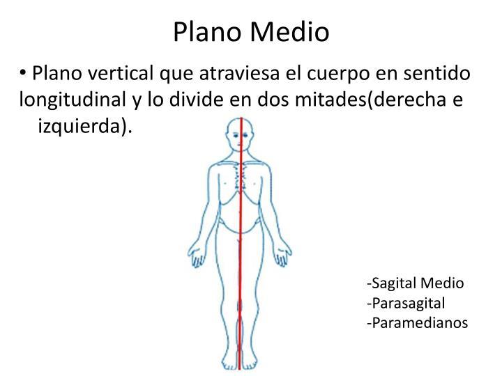 PPT - Introducción a la Anatomía PowerPoint Presentation - ID:5734141
