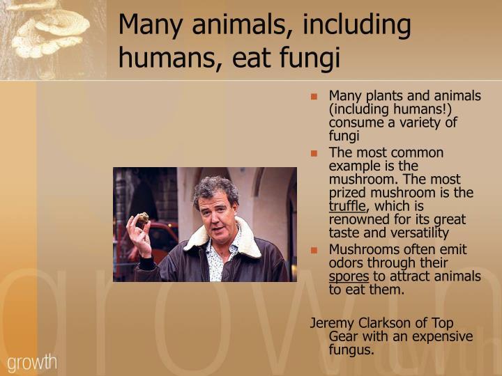 Many animals, including humans, eat fungi