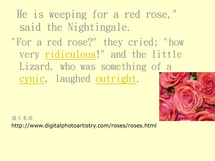 """He is weeping for a red rose,"""" said the Nightingale."""