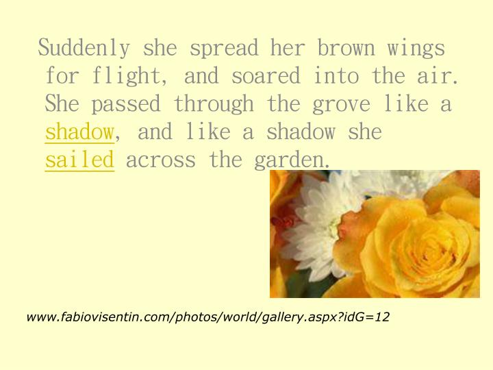 Suddenly she spread her brown wings for flight, and soared into the air.  She passed through the grove like a