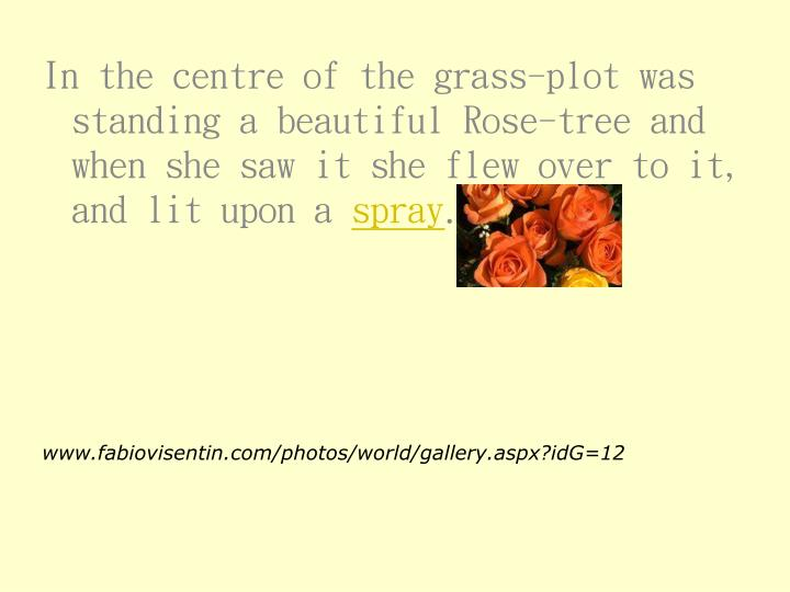 In the centre of the grass-plot was standing a beautiful Rose-tree and when she saw it she flew over to it, and lit upon a