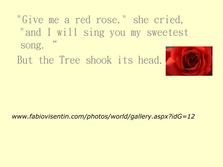 """""""Give me a red rose,"""" she cried, """"and I will sing you my sweetest song."""""""