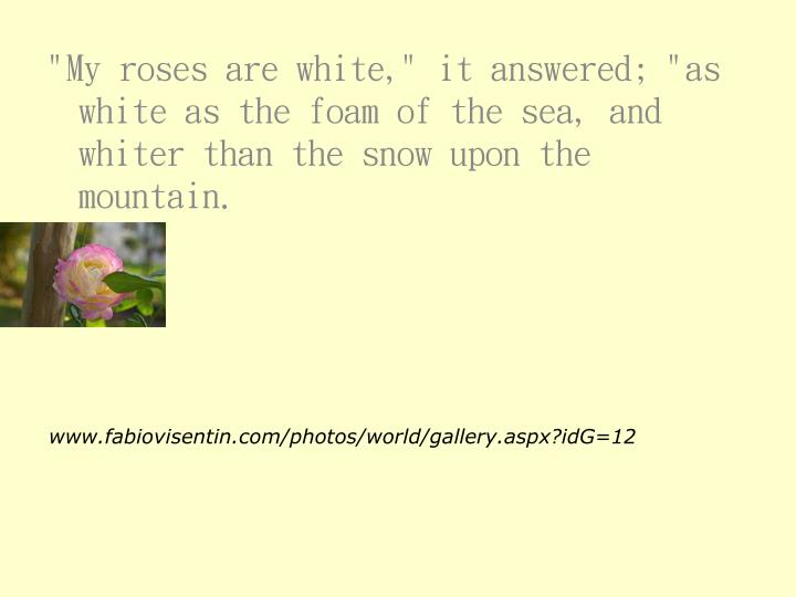 """""""My roses are white,"""" it answered; """"as white as the foam of the sea, and whiter than the snow upon the mountain."""