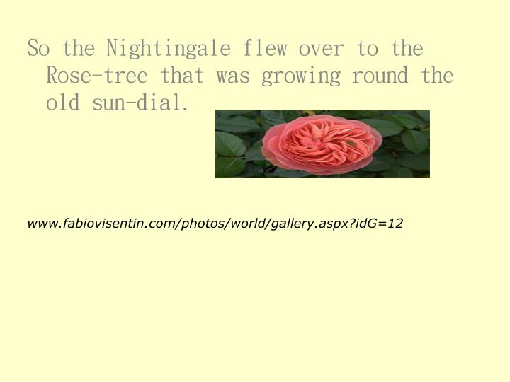 So the Nightingale flew over to the Rose-tree that was growing round the old sun-dial.