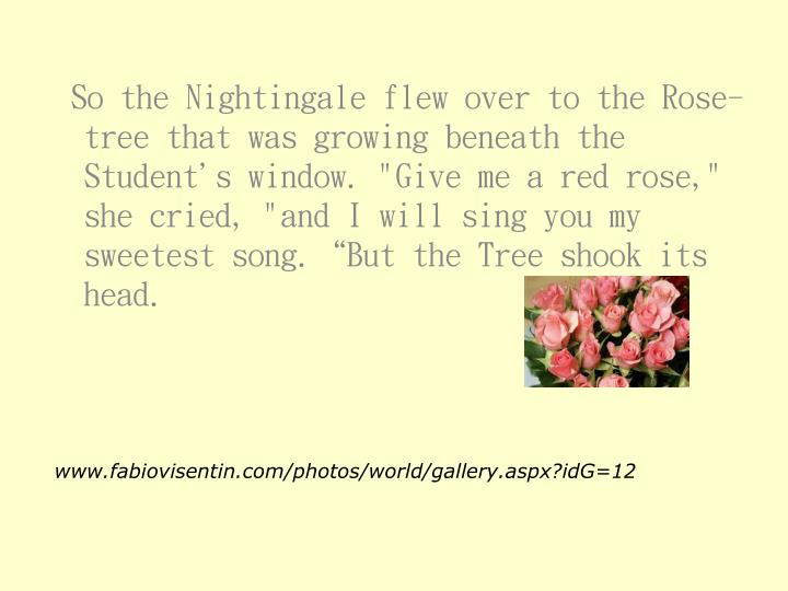 """So the Nightingale flew over to the Rose-tree that was growing beneath the Student's window. """"Give me a red rose,"""" she cried, """"and I will sing you my sweetest song.""""But the Tree shook its head."""