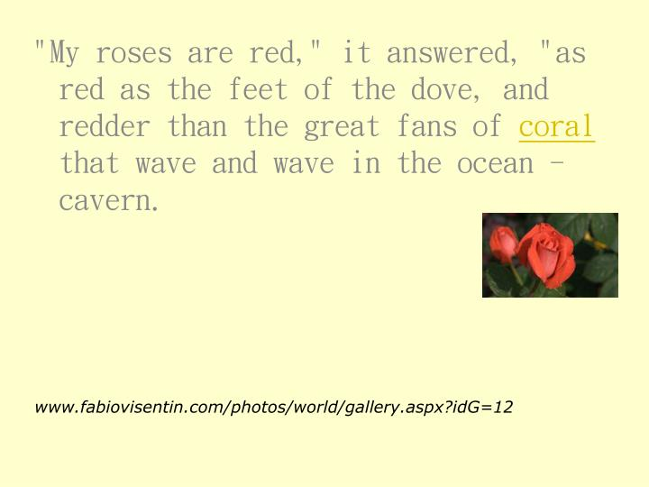 """""""My roses are red,"""" it answered, """"as red as the feet of the dove, and redder than the great fans of"""