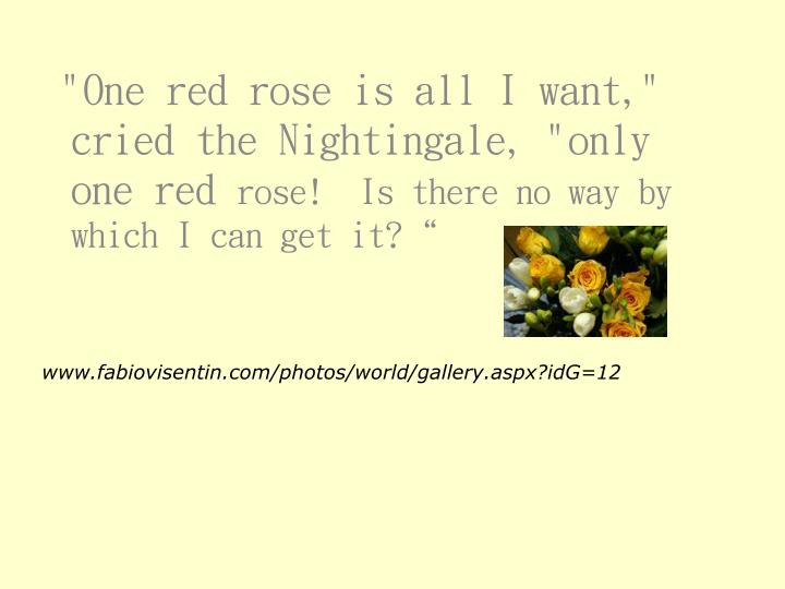 """""""One red rose is all I want,"""" cried the Nightingale, """"only one red"""