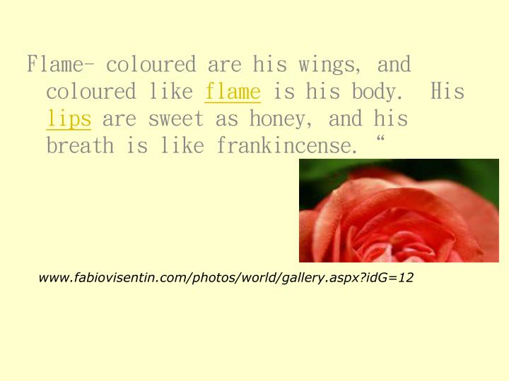 Flame- coloured are his wings, and coloured like