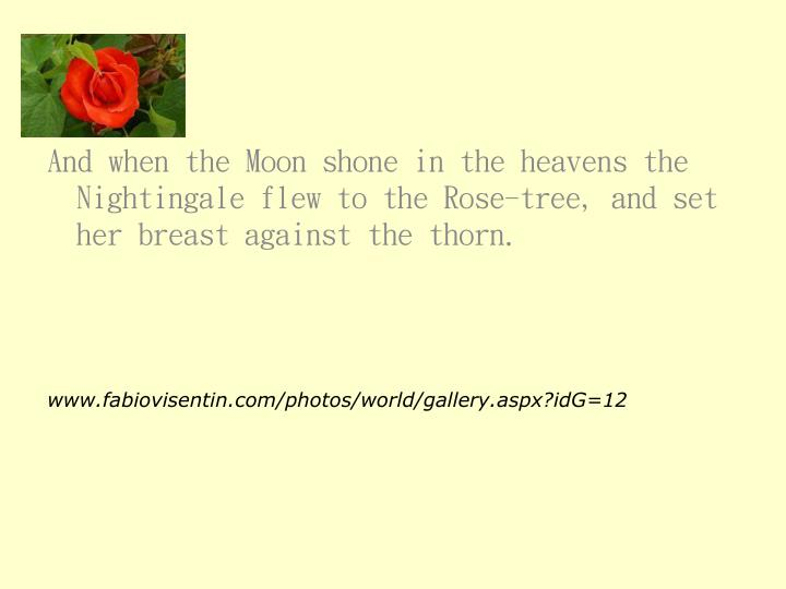 And when the Moon shone in the heavens the Nightingale flew to the Rose-tree, and set her breast against the thorn.