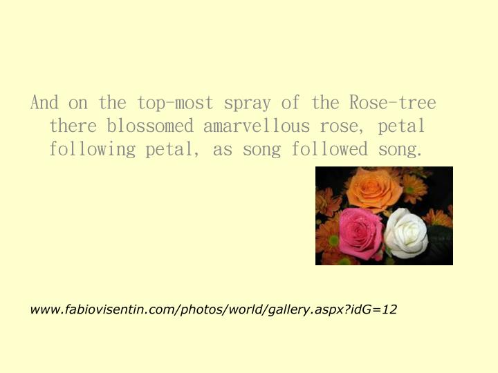 And on the top-most spray of the Rose-tree there blossomed amarvellous rose, petal following petal, as song followed song.