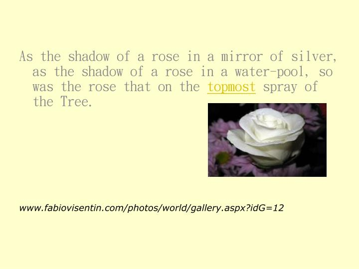 As the shadow of a rose in a mirror of silver, as the shadow of a rose in a water-pool, so was the rose that on the