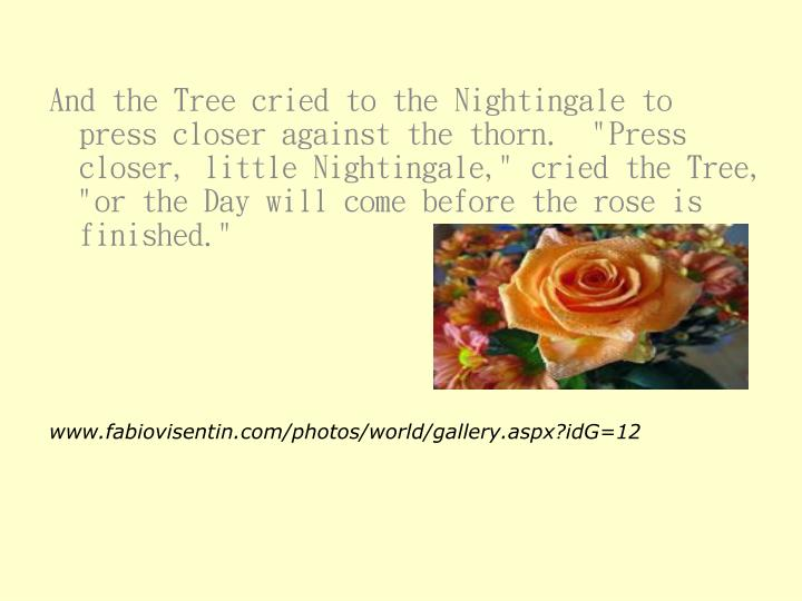 """And the Tree cried to the Nightingale to press closer against the thorn.  """"Press closer, little Nightingale,"""" cried the Tree, """"or the Day will come before the rose is finished."""""""