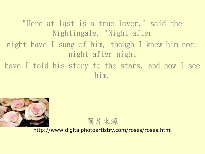 """""""Here at last is a true lover,"""" said the Nightingale. """"Night after"""