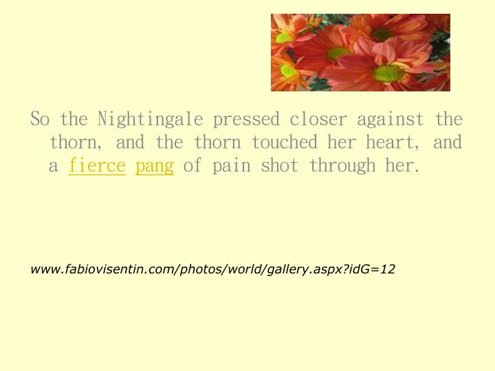 So the Nightingale pressed closer against the thorn, and the thorn touched her heart, and a