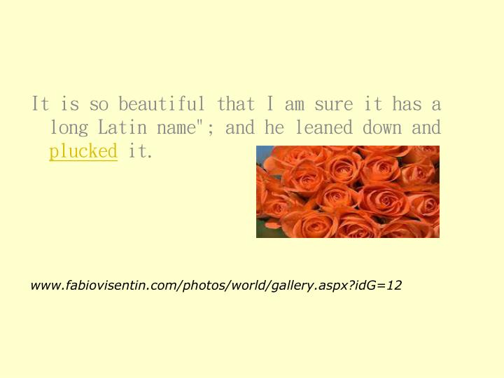 """It is so beautiful that I am sure it has a long Latin name""""; and he leaned down and"""