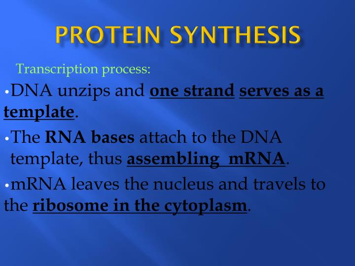 Protein synthesis1
