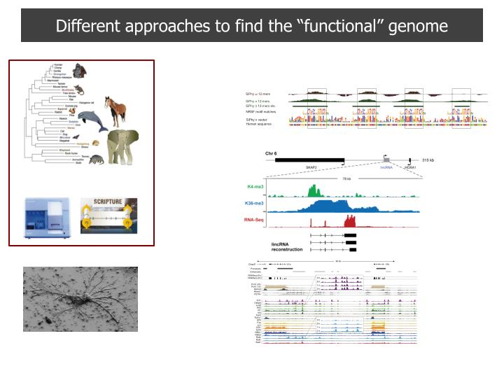different approaches to find the functional genome n.