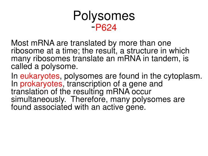 Polysomes
