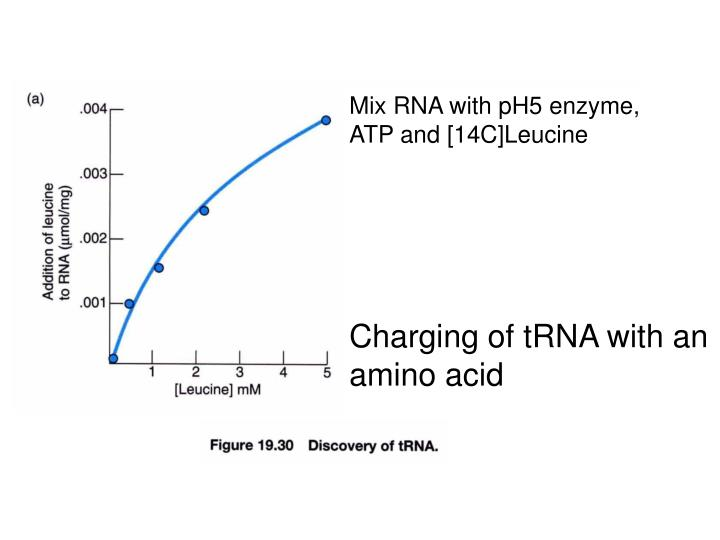 Mix RNA with pH5 enzyme,