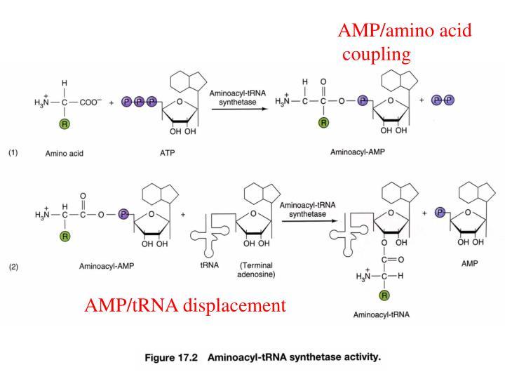 AMP/amino acid
