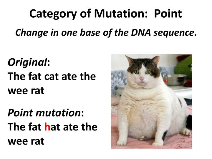 Category of Mutation:  Point