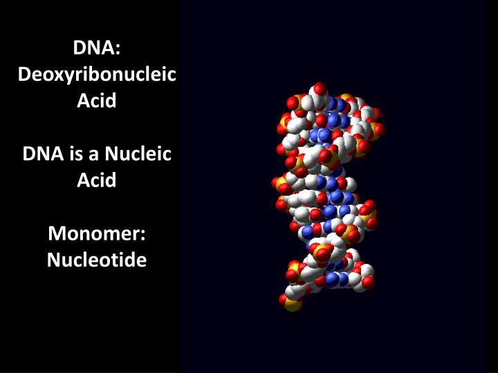 DNA: Deoxyribonucleic Acid