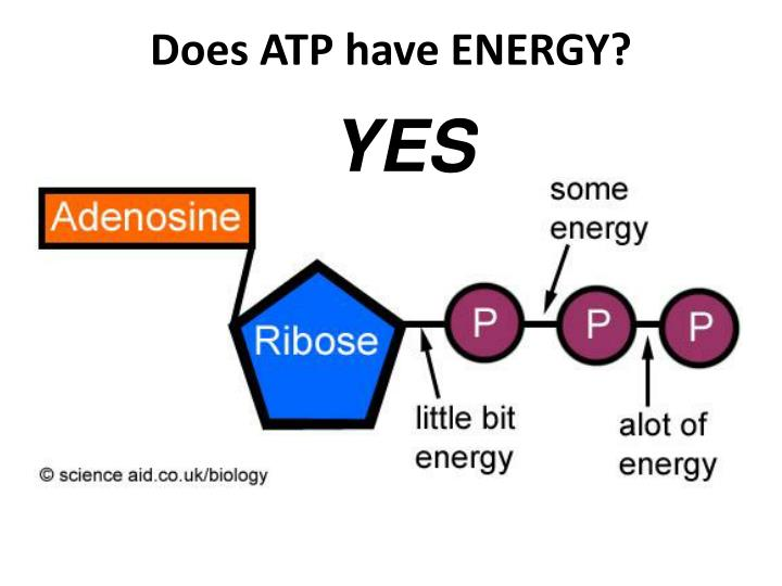 Does ATP have ENERGY?