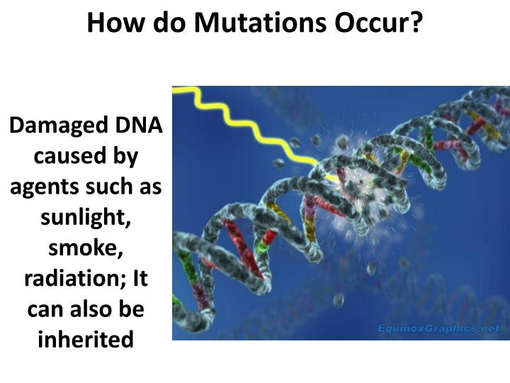 How do Mutations Occur?
