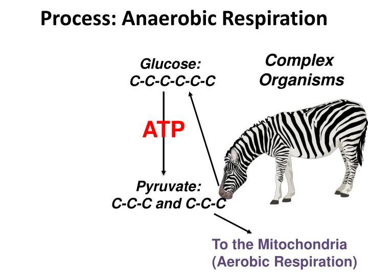 Process: Anaerobic Respiration