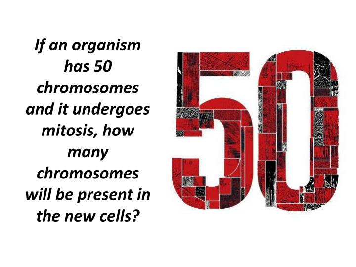 If an organism has 50 chromosomes and it undergoes mitosis, how many chromosomes will be present in the new cells?