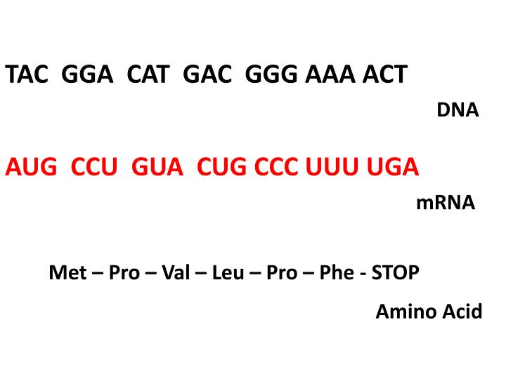 TAC  GGA  CAT  GAC  GGG AAA ACT