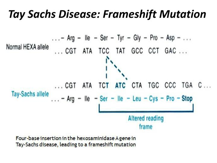 Tay Sachs Disease: Frameshift Mutation