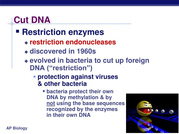 Cut DNA