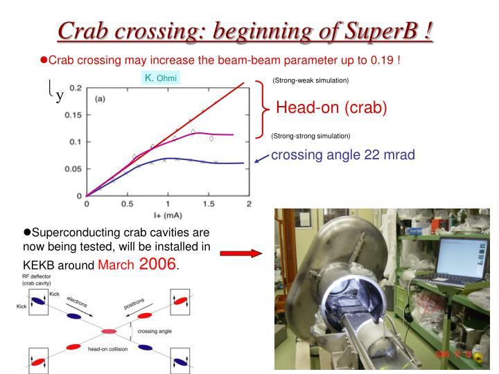 Crab crossing beginning of superb