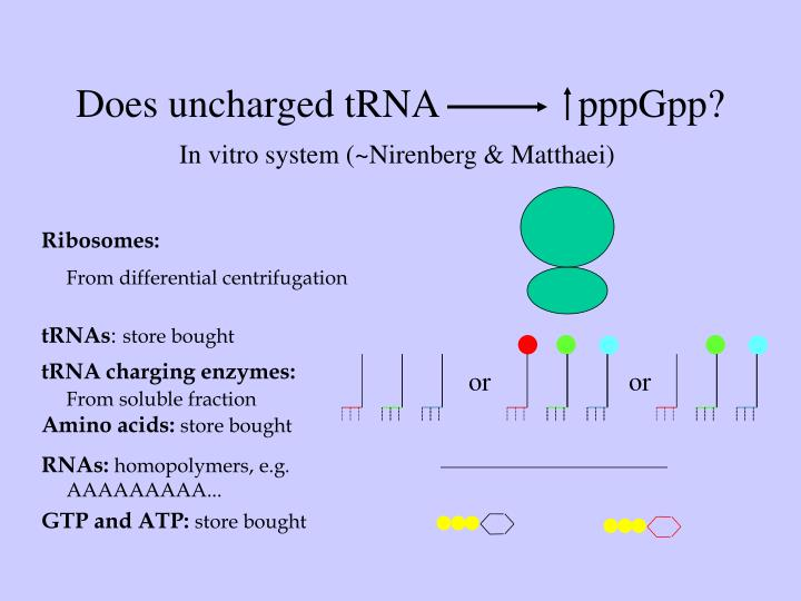 Does uncharged tRNA              pppGpp?