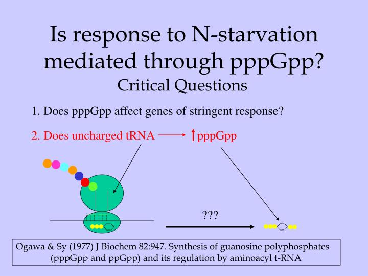 Is response to N-starvation mediated through pppGpp?