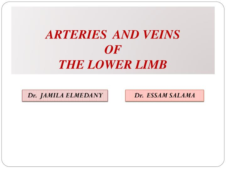 arteries and veins of the lower limb n.