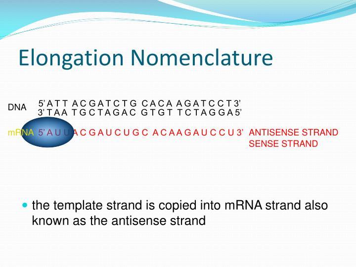 Elongation Nomenclature