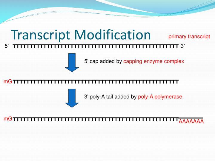 Transcript Modification