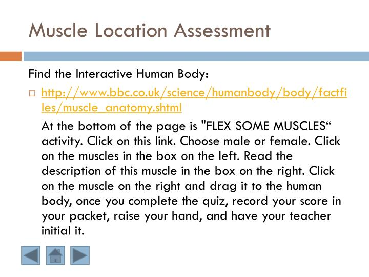 Muscle Location Assessment