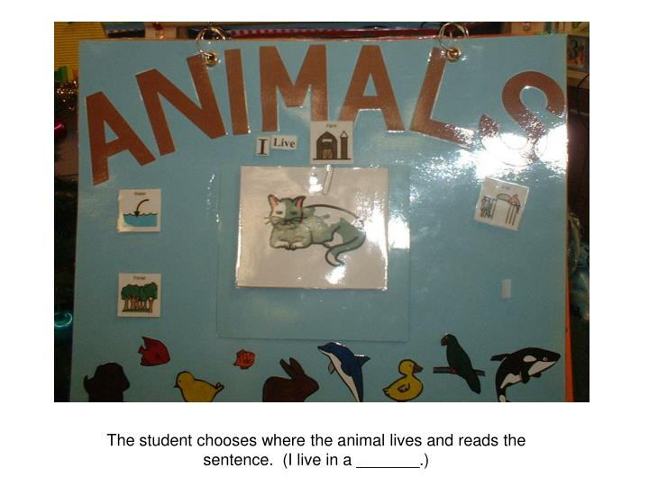 The student chooses where the animal lives and reads the sentence.  (I live in a _______.)